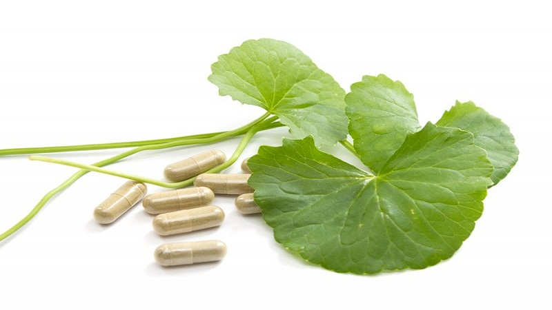 gotu kola to lose weight