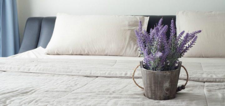 5 Plants That Help To Sleep